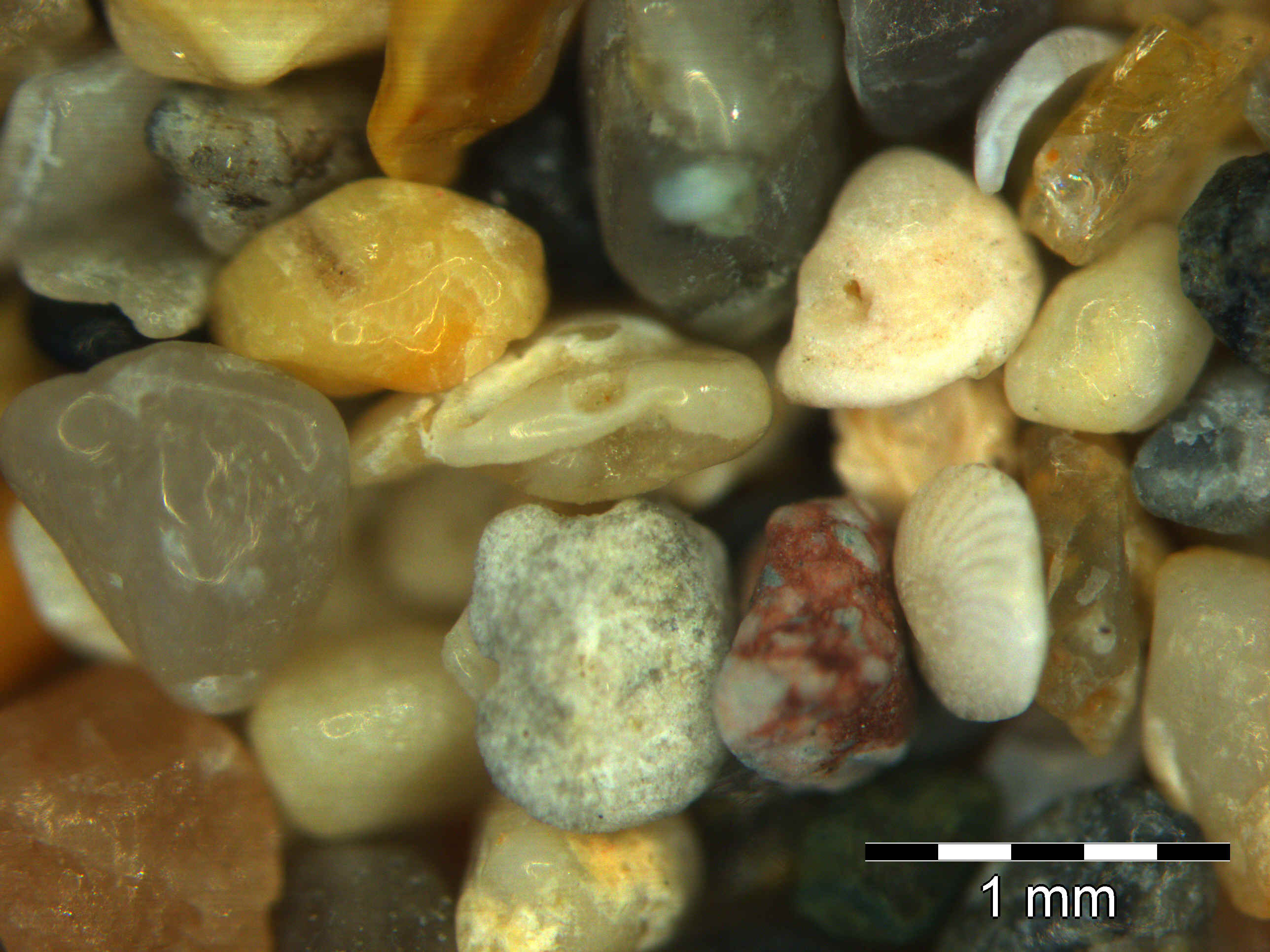 Sand Collection - Sand from Ecuador